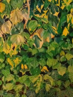 Ivy Leaves - Abi Burlingham