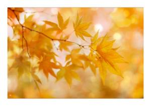 Peachy Autumn Leaves - Alyson Fennell
