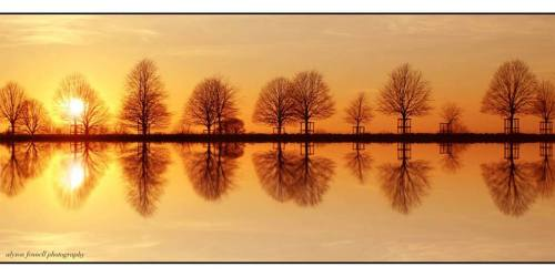 Tree Reflection - Alyson Fennell