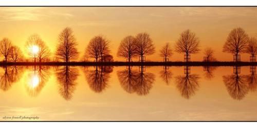 Tree Reflection - Alyson Fennell