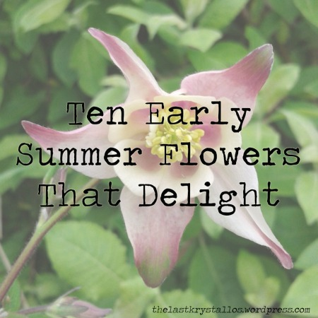 ten-early-summer-flowers-that-delight