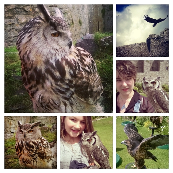 Manorbier Castle and Pembrokeshire Falconry © Lisa Shambrook