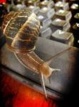 37d75-snailoremail
