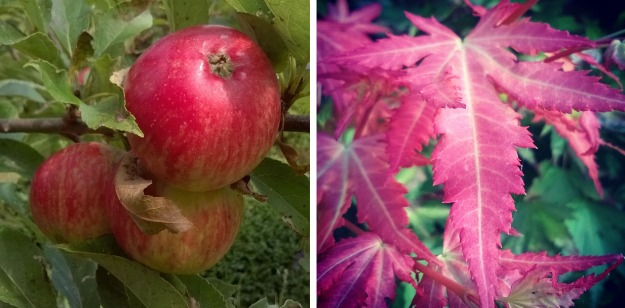 discovery apples, red apples, autumn leaves, the last krystallos,