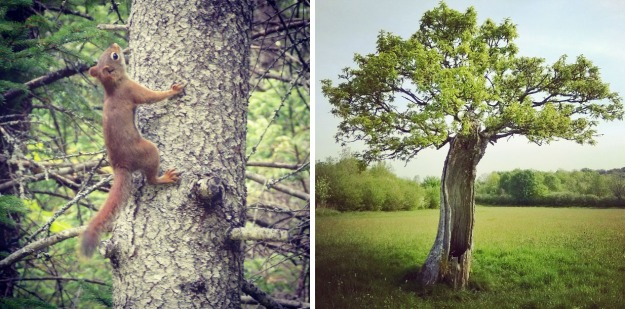 red squirrel, green castle woods oak, the last krystallos,