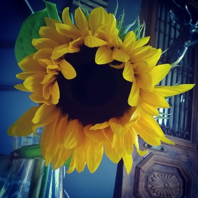 sunflower, the last krystallos,