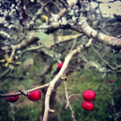 red berries, wild shrubs, the last krystallos,