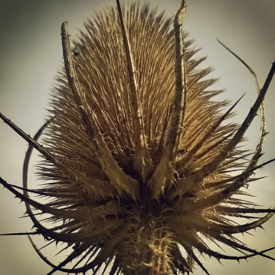teasel, the last krystallos,