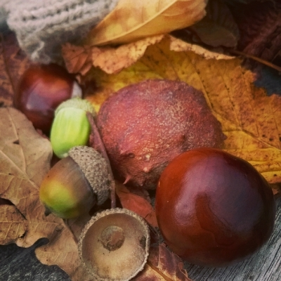 Autumn's fruit - conkers and acorns © Lisa Shambrook