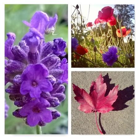 spider on lavender, flowers in the sun, meadow in sunlight, flower meadow, the last krystallos,