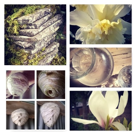 Discover moss on stone, daffodils, sunlight on water, the intricate wasp nest, and the subtle scent of magnolia, the last krystallos,