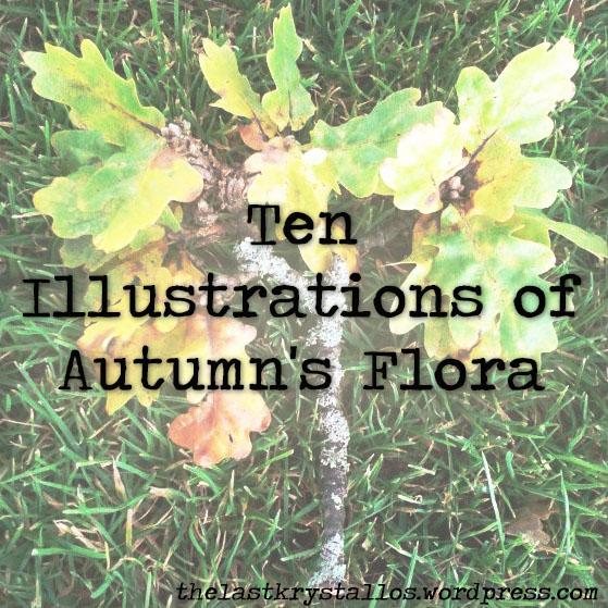 ten-illustrations-of autumns-flora-the-last-krystallos-title
