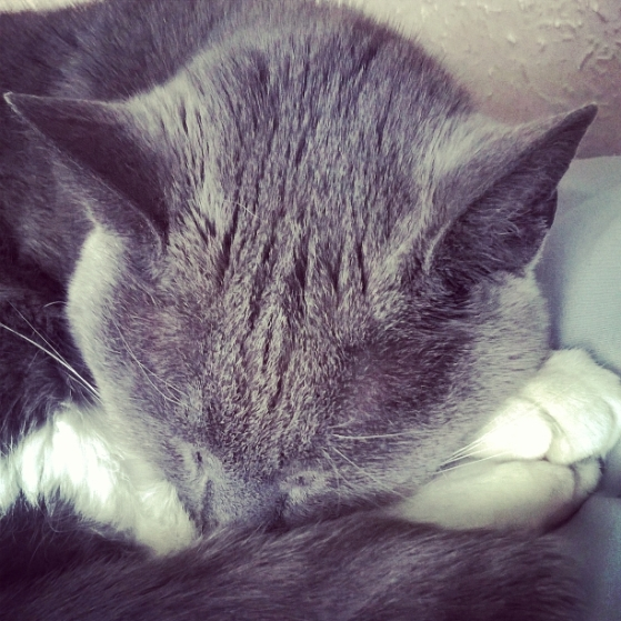 how-to-feel-loved-the-last-krystallos-cat-misty
