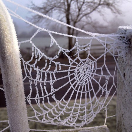 frosty-web-silence-the-last-krystallos