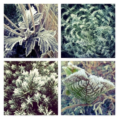 frost evergreens, ten winter wonders of nature, the last krystallos,