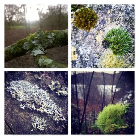 moss and lichen, ten winter wonders of nature, the last krystallos,