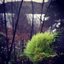 Elan Valley - Haircap Moss | Gathering Moss | The Last Krystallos