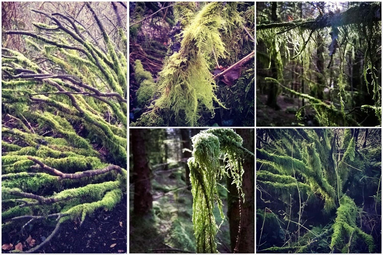 Brechfa Moss - Gathering Moss | The Last Krystallos