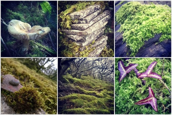 Moss in its element - Gathering Moss | The Last Krystallos