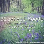 Bluebell Woods and an Enchanting Carpet of Colour