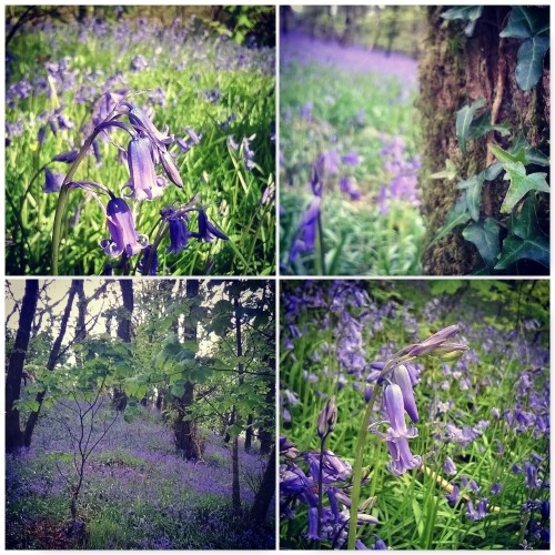 bluebells-green-castle-woods-the-last-krystallos-four