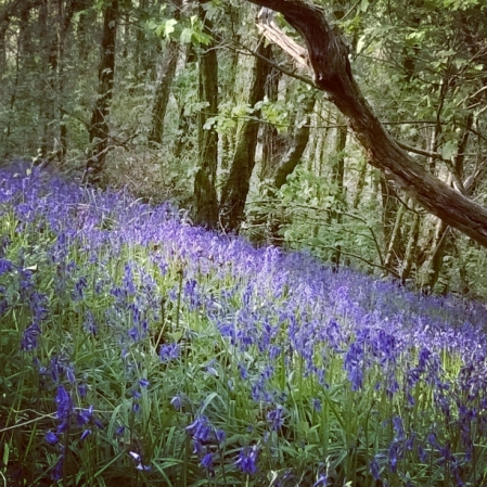 bluebells-green-castle-woods-the-last-krystallos
