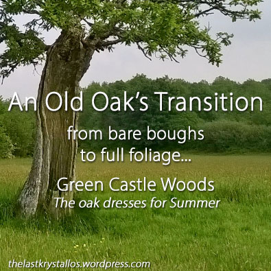 an Old Oaks Transition from bare to leaves, green castle woods, the last krystallos, lisa shambrook,