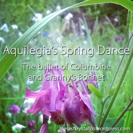 Aquilegia's Spring Dance the Ballet of Columbine and Granny's Bonnet - The Last Krystallos - Lisa Shambrook