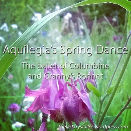 Aquilegia's Spring Dance the Ballet of Columbine and Granny's Bonnet - The Last Krystallos - Lisa Shambrook