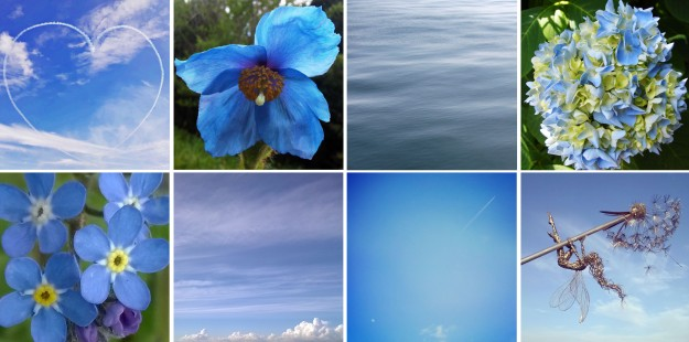 Blue the exact shade of Daddy's t-shirt… and sky, and the Himalayan poppy, ocean, and hydrangea, and forget-me-nots, and many cloudless skies…