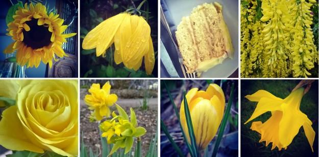 Sunflower Yellow… and sunflowers, and rudbekia, lemon cake, laburnum, and roses, and daffodils, and crocus…