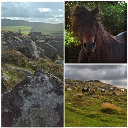 Dartmoor-pony-tors-sheep-the-last-krystallos-aug-2016