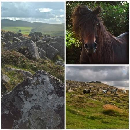 Dartmoor-pony-tors-sheep-the-last-krystallos-aug-2016