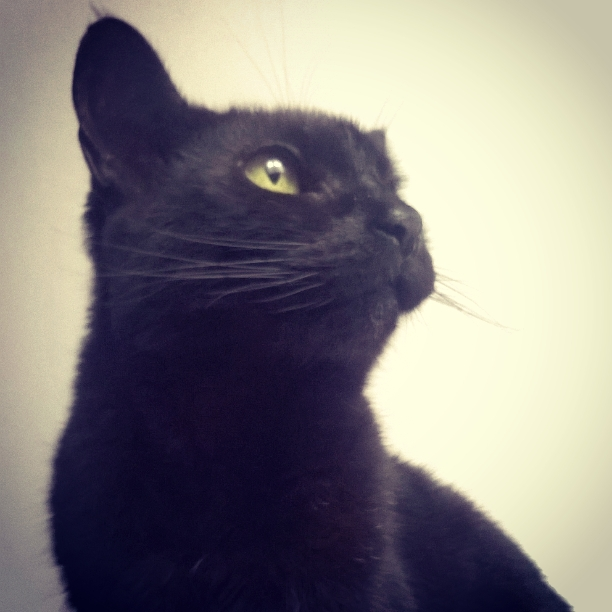 Raven-cat-the-last-krystallos