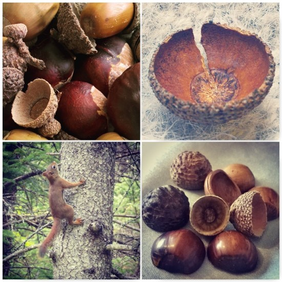 acorns-and-conkers-the-last-krystallos