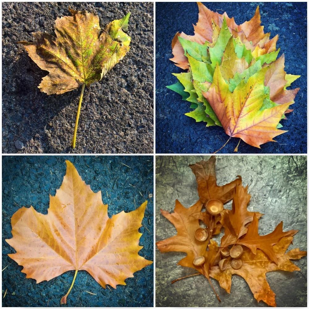 bronze-autumn-leaves-the-last-krystallos