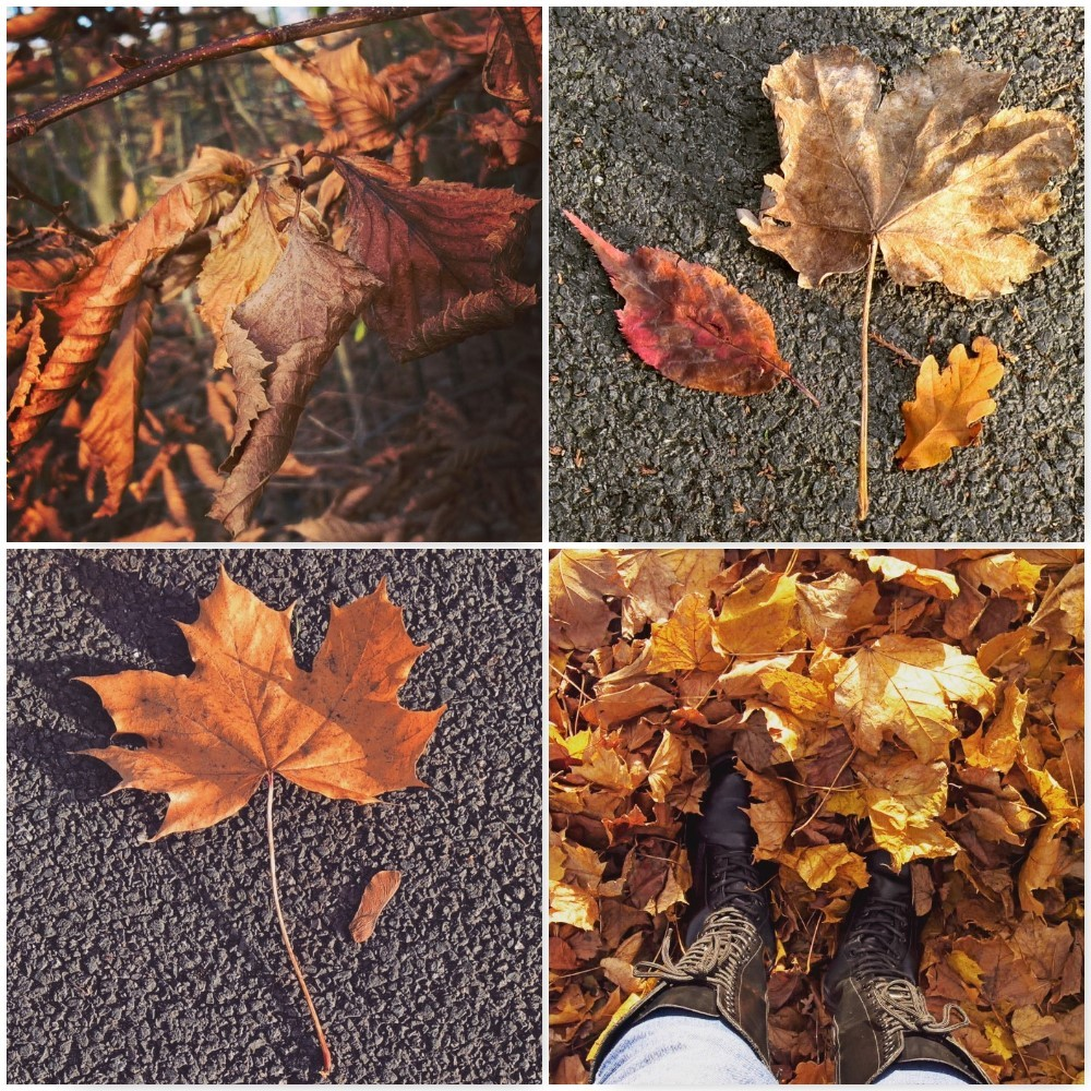 bronze-crunchy-autumn-leaves-the-last-krystallos