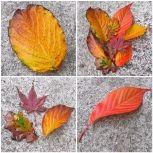 gold-bronze-red-autumn-leaves-the-last-krystallos