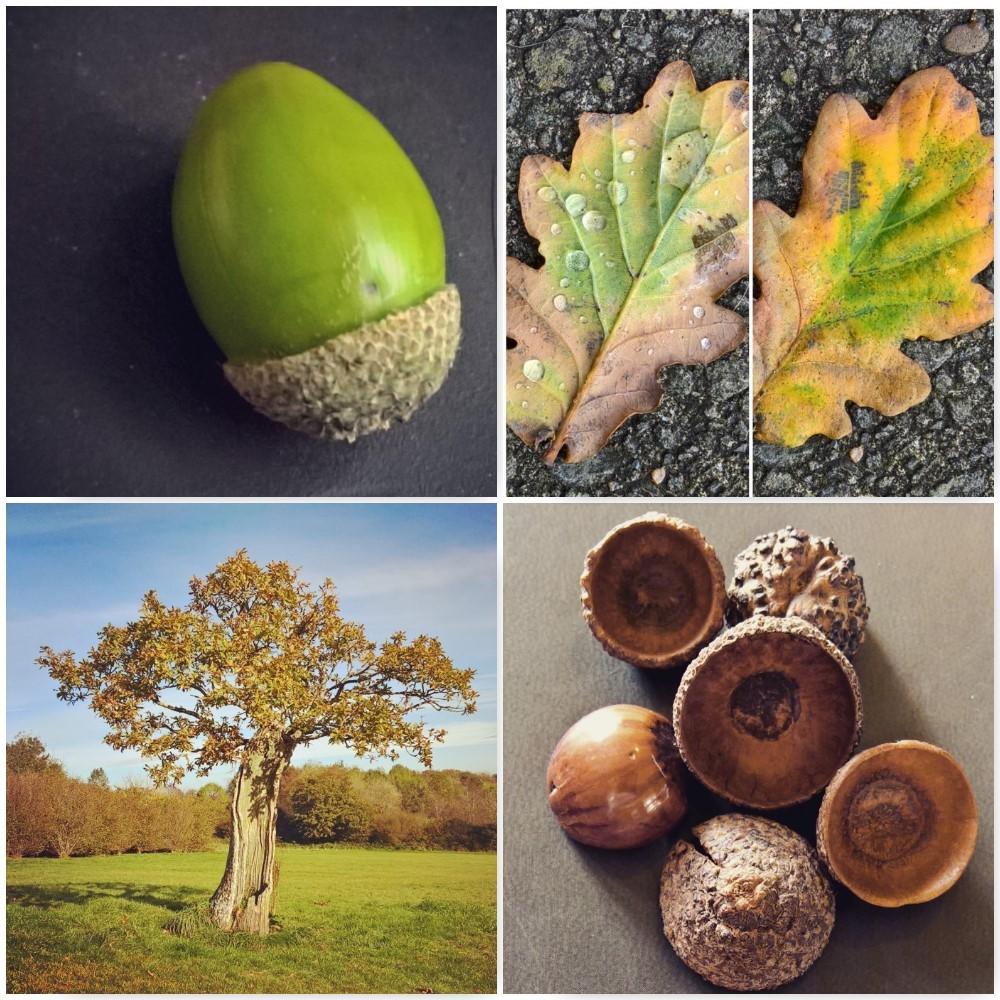oak-autumn-leaves-the-last-krystallos