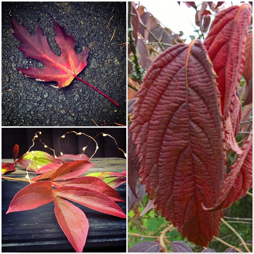 red-autumn-leaves-the-last-krystallos