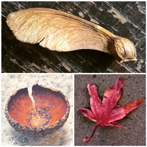 sycamore-helicopter-acorncup-red-leaf-autumn-leaves-the-last-krystallos