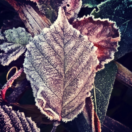 frosted-leaves-the-last-krystallos