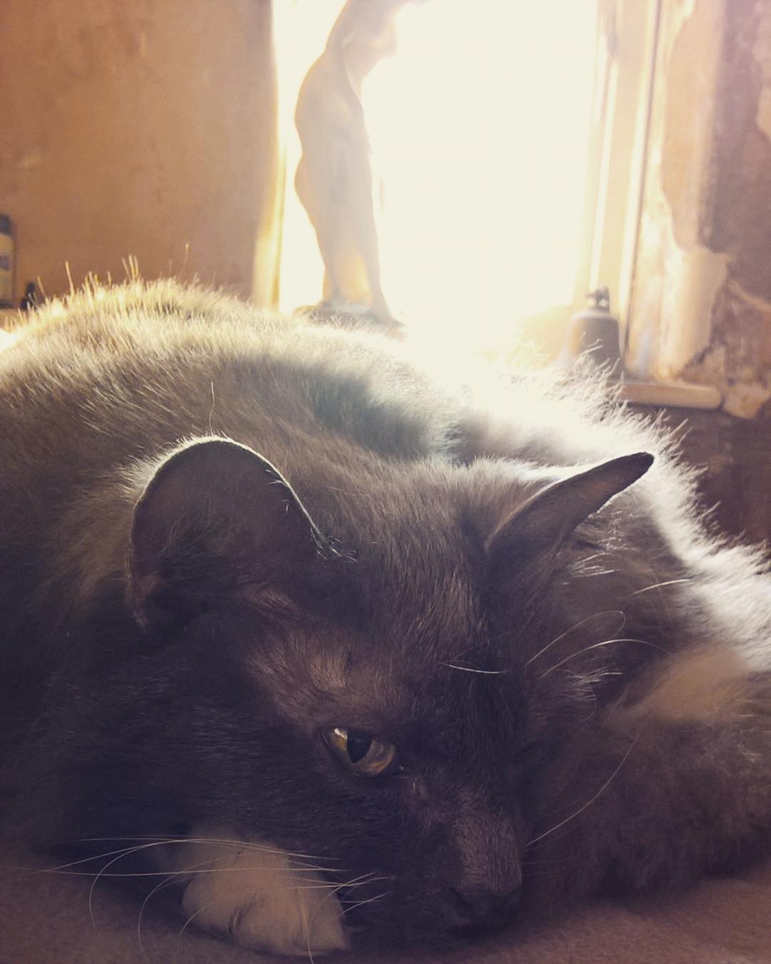 fluffy-cat-the-last-krystallos