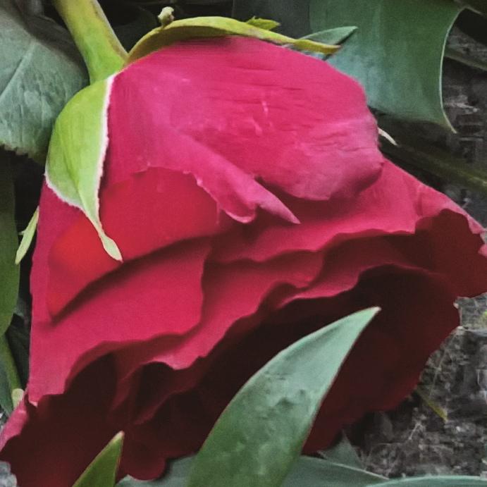 funeral-rose-the-last-krystallos