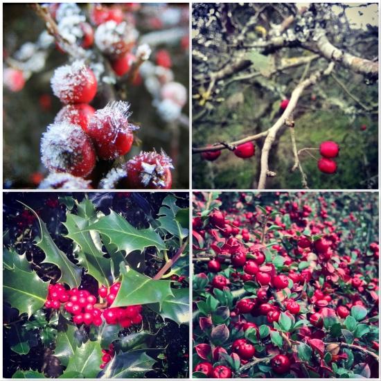 ruby-red-berries-the-best-bits-of-winter-the-last-krystallos