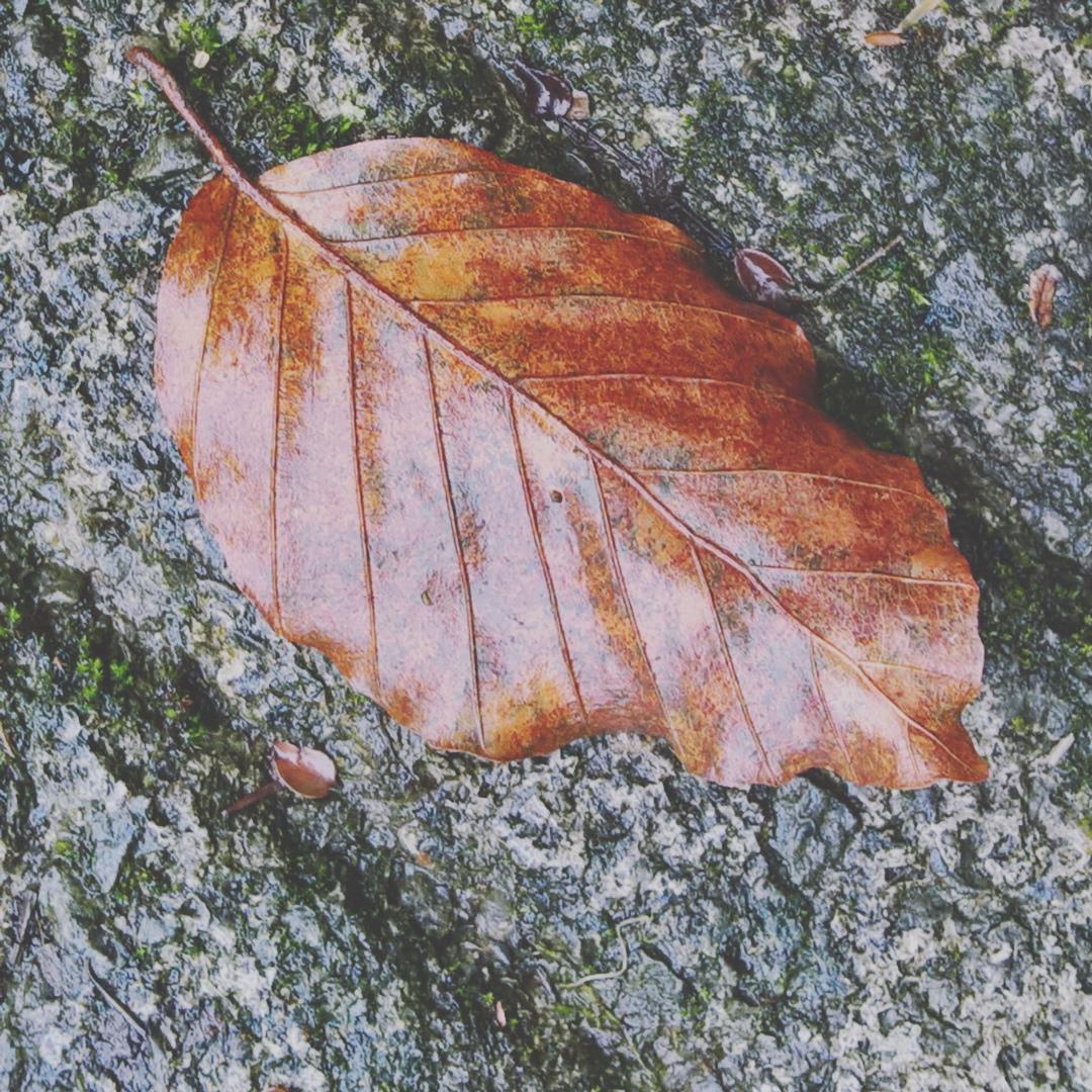 wet-leaf-the-last-krystallos