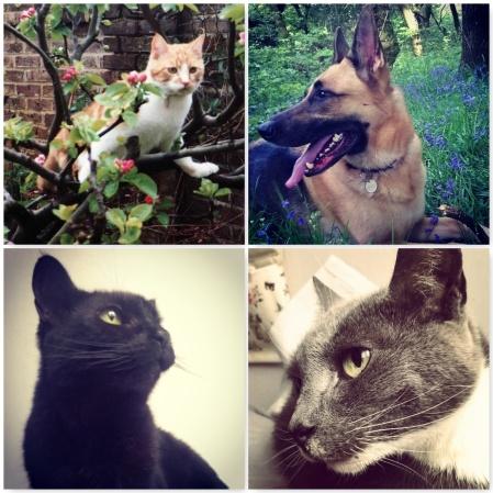 pets-the-last-krystallos
