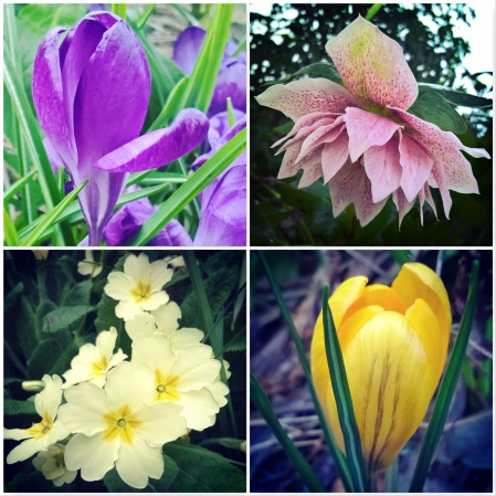 Crocus-Hellebore-Primrose-Crocus-Signs-of-spring-The-Last-krystallos