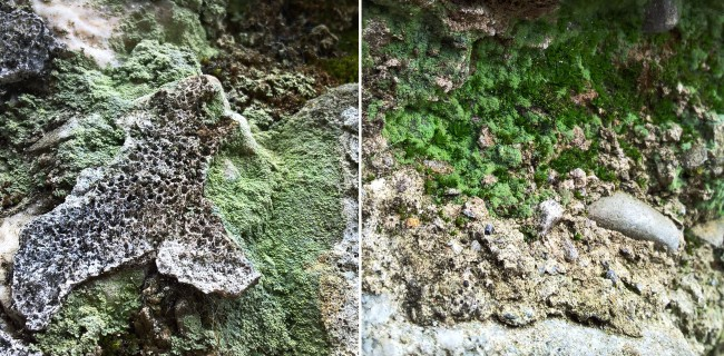Crustose-lichen-on-crumbling-wall-The-Last-Krystallos