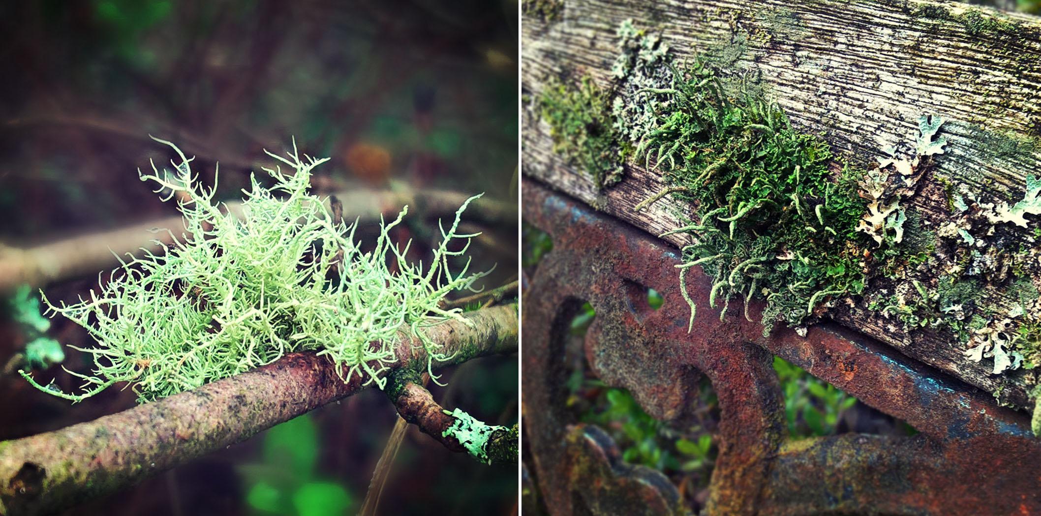 Foliose-lichen-branch-rusty-wooden-seat-The-Last-Krystallos